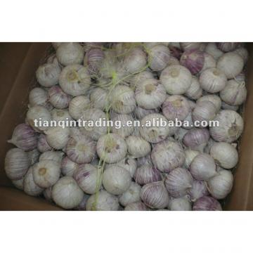 2017 chinese solo garlic