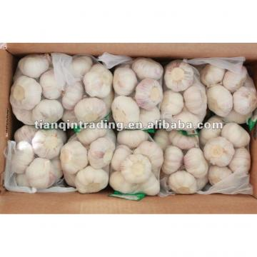 2017 best sell garlic from China