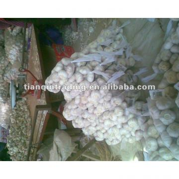 fresh garlic exporter 2017