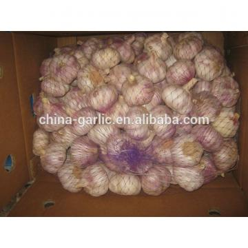 China Garlic Type and Fresh Style