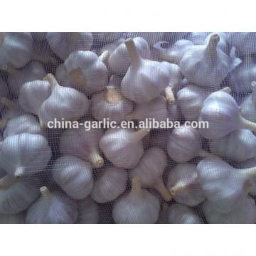 2017 new garlic in usa with best price garlic health benefits