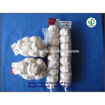 Farm china cheap garlic exporter shandong garlic with great price