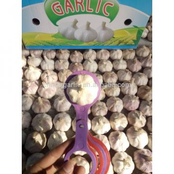 Garlic Price - Sizes 4.5cm 5.0cm 5.5cm 6.0cm -Fresh New Crop