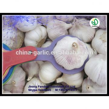 2017 China hot sale wild garlic for sale with good quality cheap price