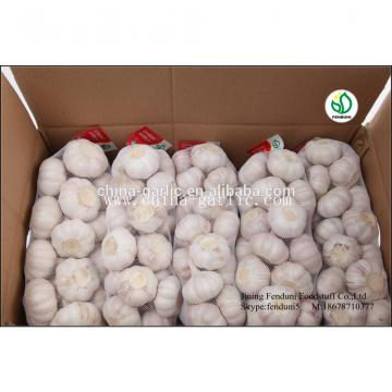 hot sale high quality garlic seed price