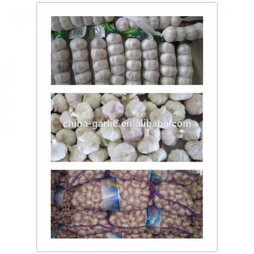 2017 new crop China cheap garlic for wholesale