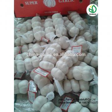 Fresh Garlic 5CM 2017 Crop Bulk Garlic Supplier