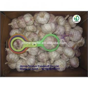 Wholesale garlic all the year round/the lowest price