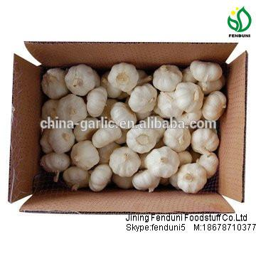 China garlic price/Natual Jinxiang garlic/ Garlic exporters china