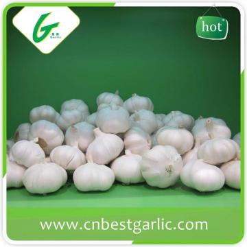 Nromal white wholesale garlic price for world market
