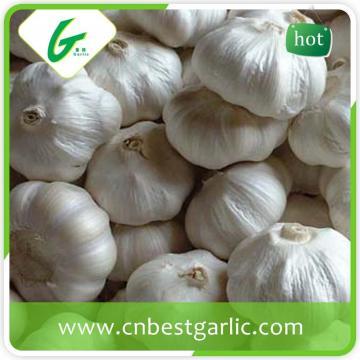5.5cm white fresh chinese cheap garlic price
