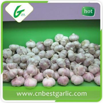 Fresh chopped clean garlic manufacturer