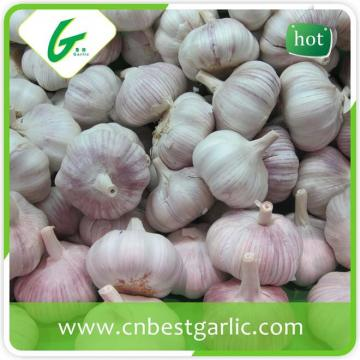 New crop fresh pure white garlic price for sales