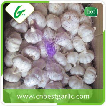 New fresh chinese selected normal white garlic fresh in china