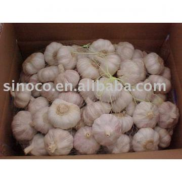 jinxiang garlic new crop