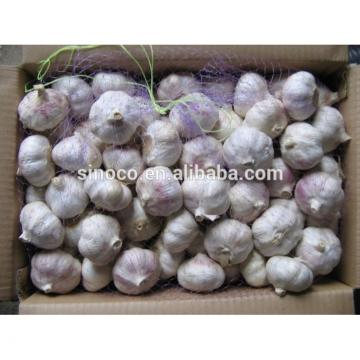 cold store normal white garlic crop 2017