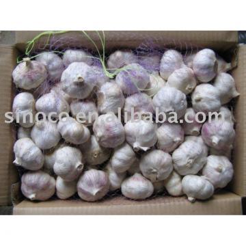 Fresh White Garlic China (Pure White)