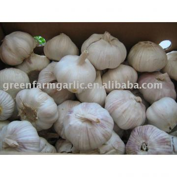 2013 chinese fresh garlic