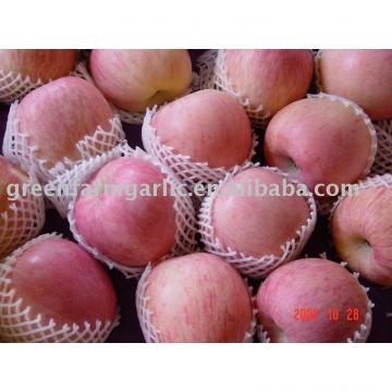 Greenfarm Fresh red fuji apple in Shandong,China