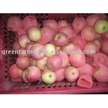 fresh red delicious apple in China