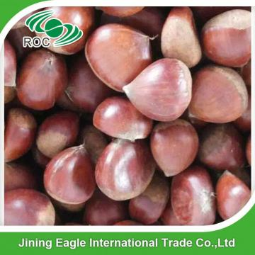 Hot sale high quality bulk sweet fresh chestnuts wholesale