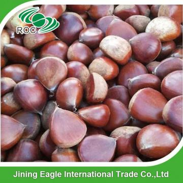 Chinese export price fresh sweet large chestnuts