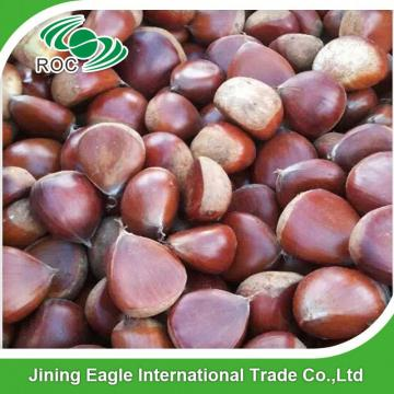 New organic nutritive sweet fresh chestnut wholesale