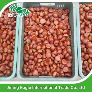 Chinese best pricing fresh raw organic chestnuts