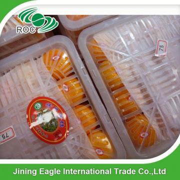 Zhejiang fresh sweet baby mandarin orange