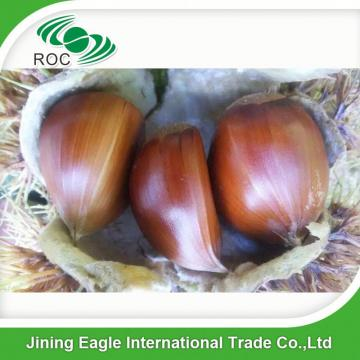 Fresh organic high quality chestnuts for sale
