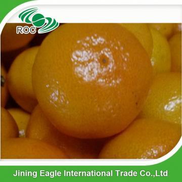 Fresh citrus fruit sweet baby mandarin oranges