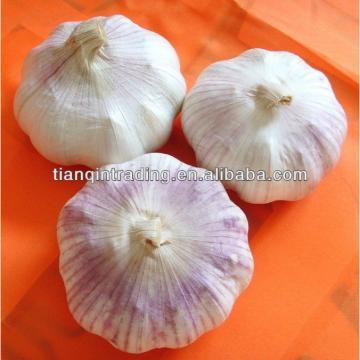 2017 fresh garlic from China