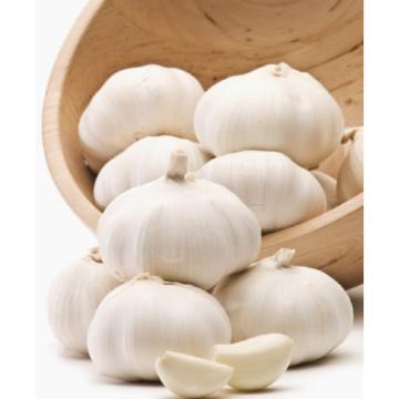 alibaba China normal white garlic price