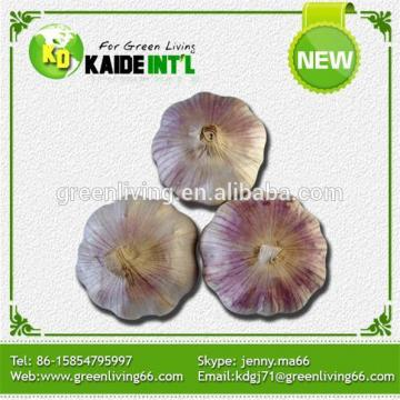 10kg Bulk Garlic From China