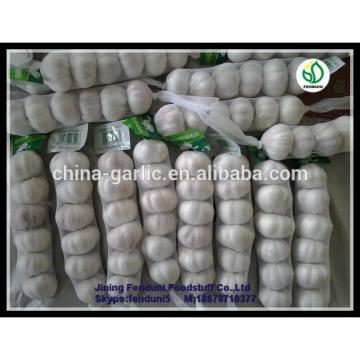 Bulk pure white fresh garlic price for sale