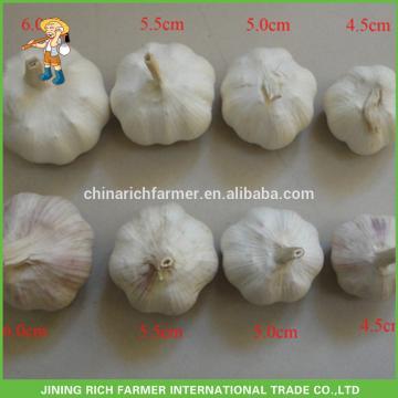 China Rich Farmer Brand Garlic Rate Size: 4.5CM, 5.0CM, 5.5CM