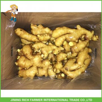 Fresh Ginger Old Ginger For Mideast Market