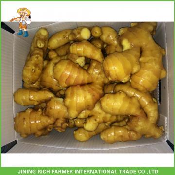 Bulk Fresh Mature Dry Old Ginger