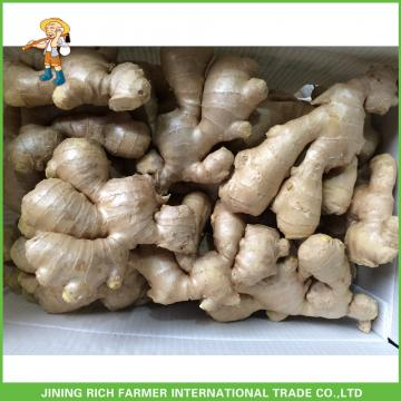 China Fresh Old Ginger Supplier
