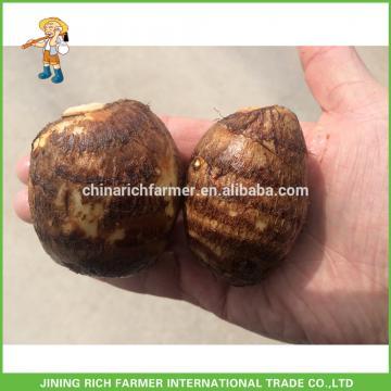 New Crop China Fresh Taro