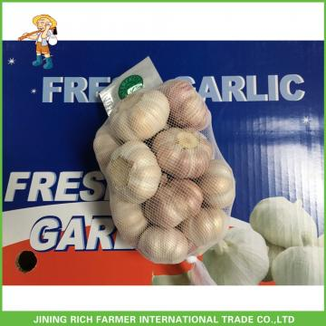 Cheapest Price New Crop Fresh Normal White Garlic 5.0cm In 10 kg Carton For Poland