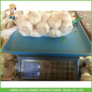 High Quality Fresh Pure White Garlic5.0 -5.5 cm In 1KG Mesh Bag In 10kg Carton For Barbados