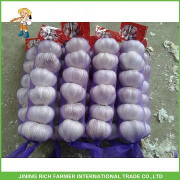 Best Price Fresh Normal White Garlic 5.0CM In 8 kg Mesh Bag For Qatar