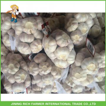 Hot Sale Fresh Normal White Garlic 5.0 cm /5p In 4 Mesh Bag For Jordan