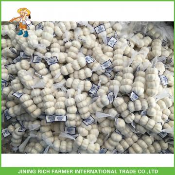 2017 Jinxiang Laiwu Pizhou Fresh White Garlic 5.0CM Mesh Bag In Carton Good Price