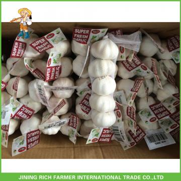 2017 Hot Sale Fresh Pure White Garlic 5.0cm /4p In 10 kg Mesh Bag For Sultan