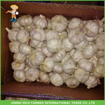 2017New Crop Fresh Normal White Garlic 5.0 cm In 20 kg Mesh Bag For Ecuador