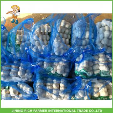 New Crop Fresh Pure White Garlic 5.0 cm In 8kg Mesh Bag For Kuwait Cheapest Price