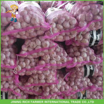 Top Quality And Best Quality Fresh Red Garlic In 8kg Carton For Saudi Arabia