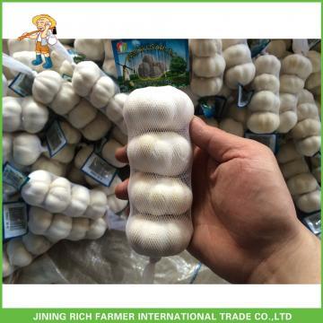 Cheapest Price High Quality Fresh Pure White Garlic 5.0CM In 8 kg Mesh Bag For Dubai